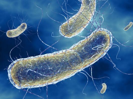 Mất cân bằng hệ vi khuẩn đường ruột gây rối loạn tiêu hóa